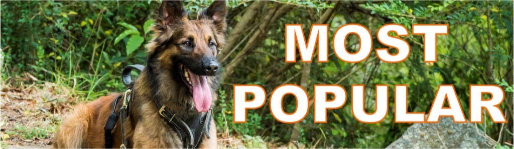 Most pop banner